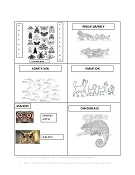Natural Selection Coloring Book By Quick Witted Owl Lesson Plans