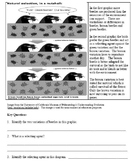 Natural Selection Common Core Reading and Writing Activity e-book zip file