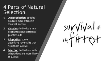 Natural Selection & Evolution Review PowerPoint