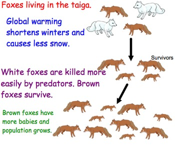 Natural Selection - Lesson Presentations, Computer Activity, Videos, Activity