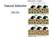 Natural Selection PowerPoint Presentation