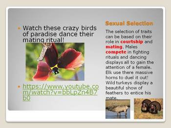 Natural Selection PowerPoint with student and teacher notes
