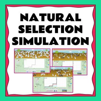 Natural Selection Simulation