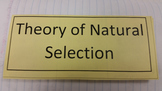 Natural Selection Tri-Fold Graphic Organizer