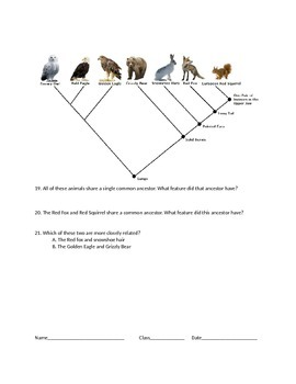 Natural Selection Unit Review