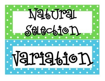 Natural Selection Word Wall