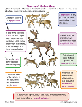 Natural Selection and Adaptation of Animals - Grade 3 NGSS