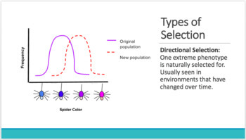 Natural Selection and Evolution: Unit Notes