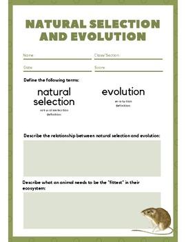 Natural Selection and Evolution Worksheet