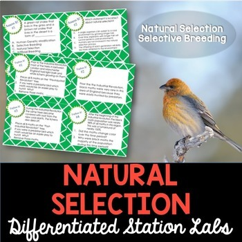 Natural Selection and Selective Breeding Student-Led Station Lab