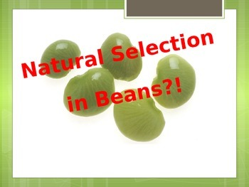 Natural Selection in Beans