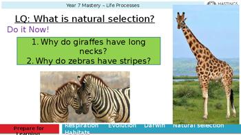 Natural Selection made fun