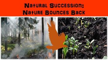 Natural Succession: Nature Bounces Back Lesson