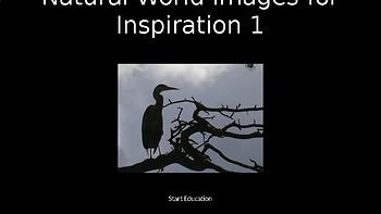 Natural World Volume 1 - 80 Copyright Free Photographs
