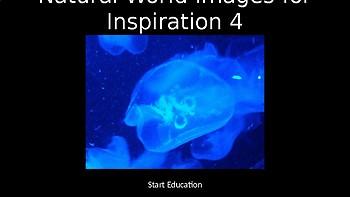 Natural World Volume 4 - 80 Copyright Free Photographs