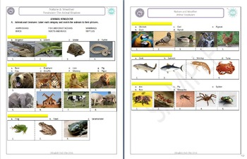 Nature (B): Animal Vocabulary, physical features & verbs  (ESL)