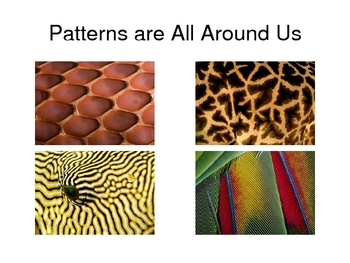 Nature Patterns - Using Our Eyes