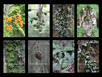 Photographs: Nature Texture in the Woods