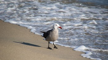 Nature Pictures: Birds of the Ocean