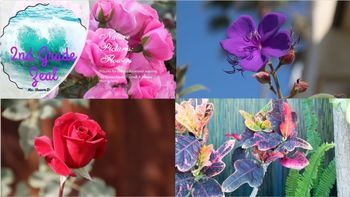 Nature Pictures: Flowers