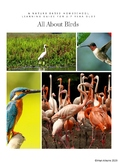 Nature PlaySchool - All About Birds Project Based Reggio I