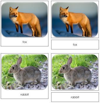 Nature Safari Toob Cards - Montessori