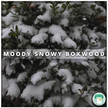 Nature Stock Photo Moody Snowy Boxwood