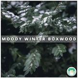 Nature Stock Photo Moody Winter Boxwood