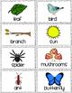 Nature Walk - TSG Science - Activity Sheet, Anecdotal Reco