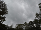 Photo Products - NearlyBlack and White Tree Tops and Storm Clouds Theme