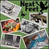 Neat Feet: Animal Adaptations Matching Activity