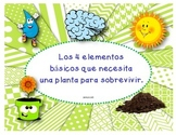 Necesidades de las plantas: 4 elementos básicos para que la planta viva