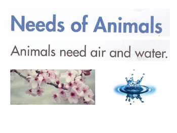 Needs of Animals: Air, Water, Food and Shelter