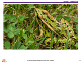 Needs of Animals and Plants - Lesson 7 Leopard Frogs and Porcupine Grass
