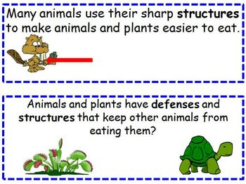 Needs of Plants and Animals Amplify Kindergarten