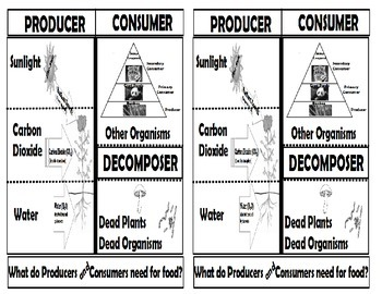 Needs of Producers, Consumers and Decomposers