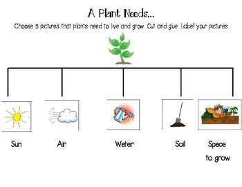Needs of a Plant