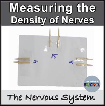 Nervous System: Nerve Density