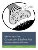 Nerve Impulse Physiology (Action Potentials) & Reflex Arcs