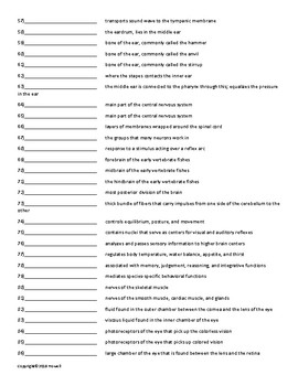 Nervous Coordination Vocabulary Quiz or Worksheet for Zoology