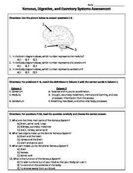 Nervous, Digestive, and Excretory Systems Test