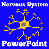 Nervous System | 1st 2nd 3rd 4th 5th Grade | PowerPoint Activity