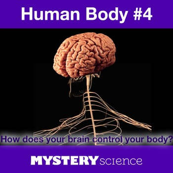 Human Body NGSS:Nervous System ❤ BUNDLE:Activity, Reading,Assessment—SALE