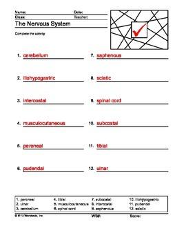 Nervous System ABC Order Printable