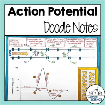 Nervous System: Action Potential Graph Doodle Notes