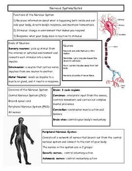 Nervous System & Alcohol Quick Sheet- 1 page of notes each