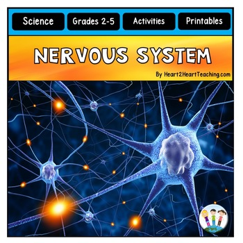 The Human Body - Nervous System - Our Brains, Nerves, Reflexes & More!
