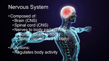 Nervous System: Anatomy and Physiology