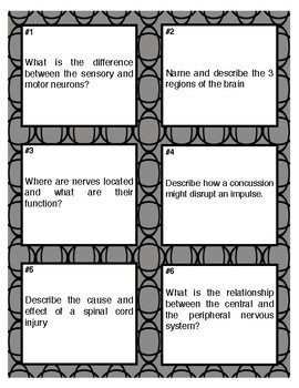 Nervous System Article, Graphic Organizer, Task Cards