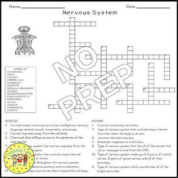 Nervous System Biology Science Crossword Coloring Worksheet Middle School